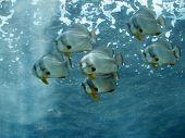 Tropical Fish School