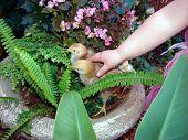 Hühner und des Kindes hand