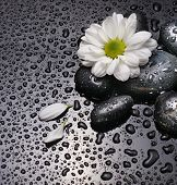 pic of white flower  - black stones and white flower with water drops - JPG