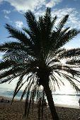 Sprawling Palm