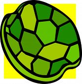 stock photo of turtle shell  - turtle shell - JPG