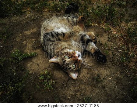 poster of Cat. Cat Lies On The Ground. Funny Cat Closeup. Portrait Of A Cat. A Domestic Cat Lying On The Groun