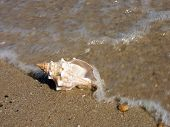 Big seashell on sand washed ashore