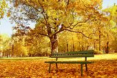 Wooden park bench in the park in fall time