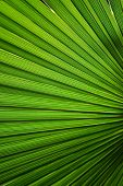 foto of tropical plants  - Tropical palm background - JPG