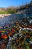 North Fork Flathead River - Montana