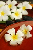 pic of plumeria flower  - Frangipani and scented water - JPG