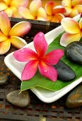 Plumeria in the spa
