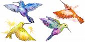 Sky Bird Colorful Colibri In A Wildlife By Watercolor Style Isolated. poster