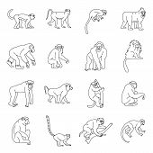 Monkey Types Icons Set. Outline Illustration Of 16 Monkey Types Icons For Web poster