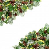Natural winter and Christmas flora border with snow covered spruce pine fir, ivy leaf sprigs, mistle poster