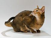 Cat In Studio With Curiosity Looks