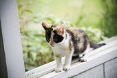 foto of screen-porch  - Kitten balancing on the window sill - JPG