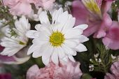 stock photo of flower arrangement  - Pink floral wedding arrangement with a daisy in the center - JPG