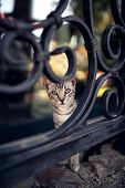 beautiful cute tabby cat stays on fence poster