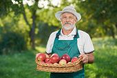 Man With Showing Harvest, Holding Basket Full Of Red Delicious Apples. poster