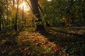 Autumn In The Park In Sunset. Sunset In City Park In Autumn. Public Park In Autumnal Colors. Fall In poster