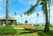 Hammock Between Palm Trees On Tropical Beach