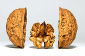 Walnut Between Shells