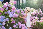 Little Girl In Bushes Of Hydrangea Flowers In Sunset Garden. Flowers Are Pink, Blue, Lilac And Bloom poster
