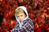 Upset A Little. Upset Boy. Little Boy Feel Sad On Autumn Day. Unhappy Little Child. Being Upset And  poster