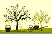 picture of hand-barrow  - vector hand barrow with basket of pears in pear orchard - JPG