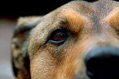 Puppy Eye