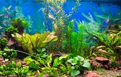 stock photo of neon green  - Interior aquarium - JPG