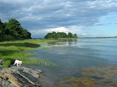 stock photo of cockapoo  - Beautiful afternoon in Maine Calm water happy dog - JPG
