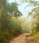Misty morning  in jungle near Umphang. Tak Province in northwestern Thailand. January.