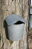 Maple Sugaring Bucket