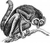 Lemur.eps