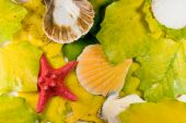 Seashells and a red starfish on leaves