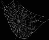 picture of spider web  - illustration with spider web isolated on black background - JPG