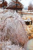 Trees break under the weight of winter ice