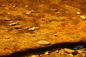 Gold And Brown Water From Moors
