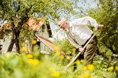 image of hoe  - Old farmer with a hoe weeding in the garden - JPG