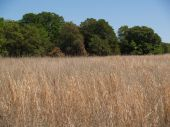 picture of tallgrass  - Tallgrass meadow of the Great Plains taken in Stillwater - JPG