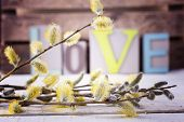 Fresh Willow Flowers On Wooden Background.