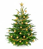 Beautiful Christmas Tree With Gold Baubles
