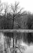 Tree Near The Pond