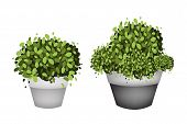 Green Trees in Terracotta Flower Pots on White Background
