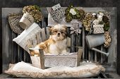 Shih Tzu in front of a rustic background