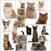 Composition of cats
