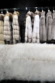 Part Of White Fur