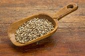 hemp seeds on a rustic wooden scoop against grunge wood