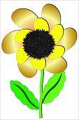 Sunflower .