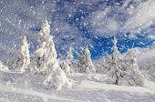 Sunny winter landscape. Mountain forest under snow. Christmas spirit