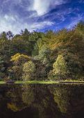 Autumn Trees Reflection