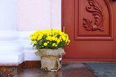 Flowers in pot on wooden door background